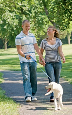 Couple Walking Dog - weight loss programs in charlotte