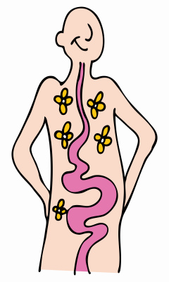 Digestive Tract - crohn's disease treatment in charlotte