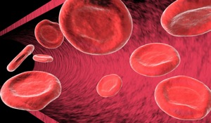 Blood Cells - charlotte infection testing