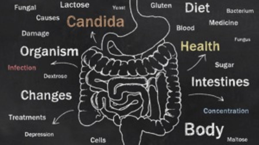Digestive Tract -