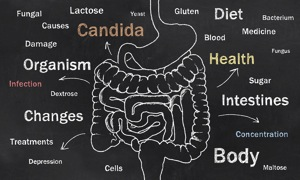 Digestive Tract - food sensitivity in charlotte