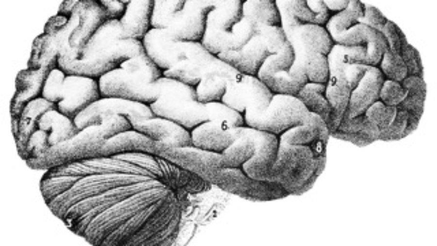Brain - charlotte brain inflammation treatment