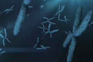 Chromosomes - charlotte hormone imbalance treatment